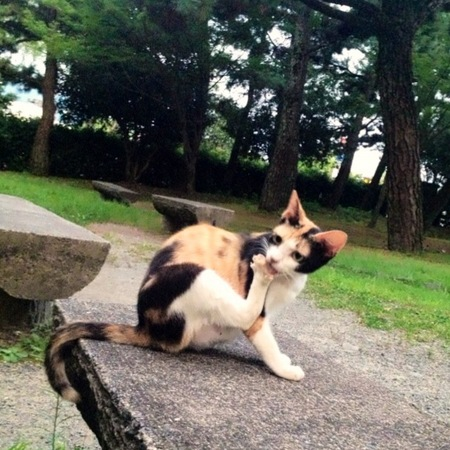 糺の森の猫