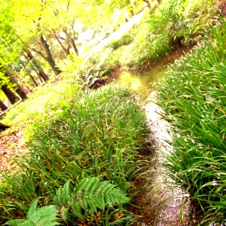下賀茂神社糺の森