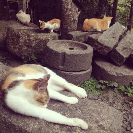 猫だらけ・哲学の道 (3).jpg