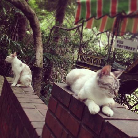 猫だらけ・哲学の道 (4).jpg